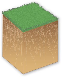 Revolution Soil Surfactant Turf Building block
