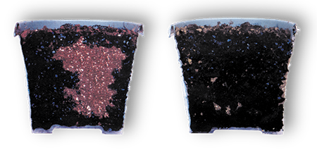 Side by side comparison of soil pots using and not using AquaGro 2000 M