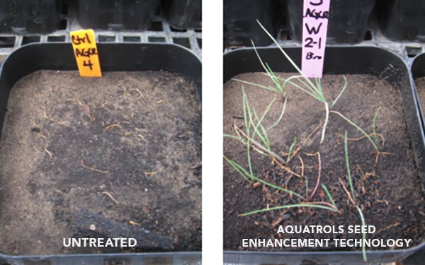Untreated seeds vs. Aquatrols Seed Enhancement Technology